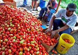Economica agricola Honduras