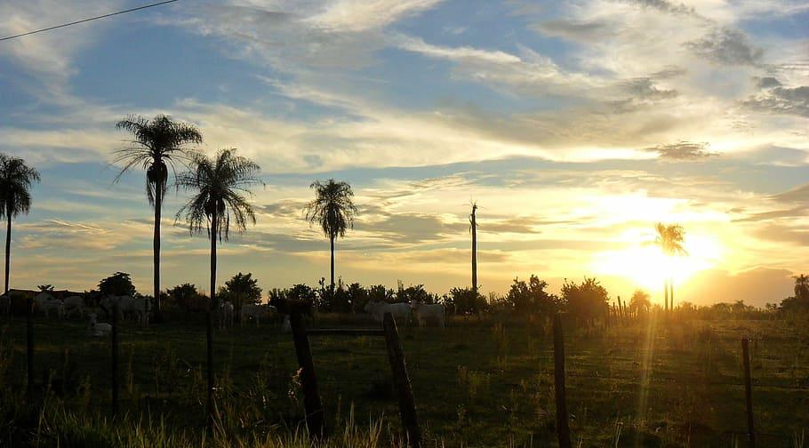 Landscape of Paraguay