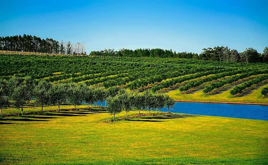 Uruguay Fields